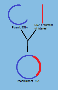 Recombinant DNA - Genome ed